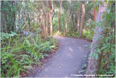 Gumbo-Limbo Trail at the Royal Palms