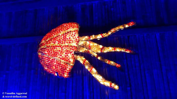 Octopus at 'Sealabration'